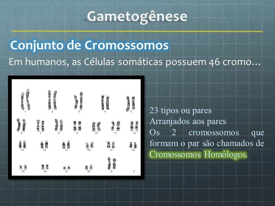 Em humanos, as Células somáticas possuem 46 cromo…