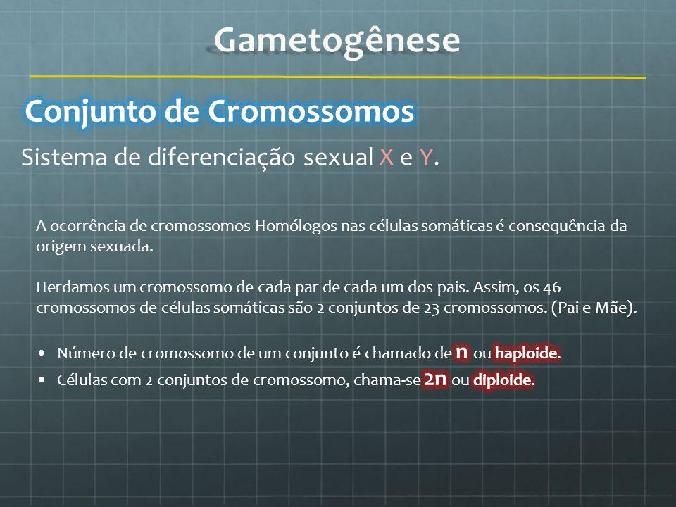 Sistema de diferenciação sexual X e Y.