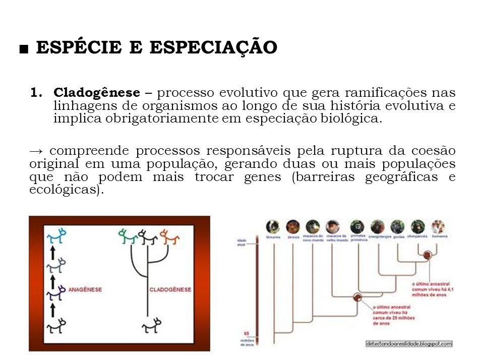 1. Cladogênese – processo evolutivo que gera ramificações nas linhagens de organismos ao longo de sua história evolutiva e implica obrigatoriamente em
