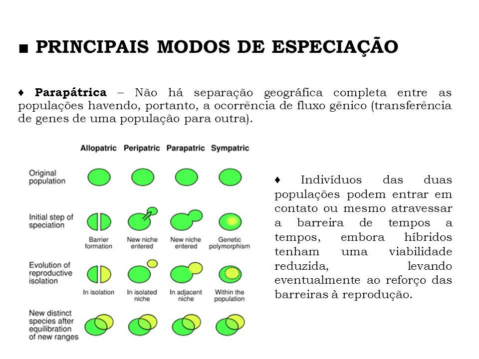Parapátrica – Não há separação geográfica completa entre as populações havendo, portanto, a ocorrência de fluxo gênico (transferência de genes de uma