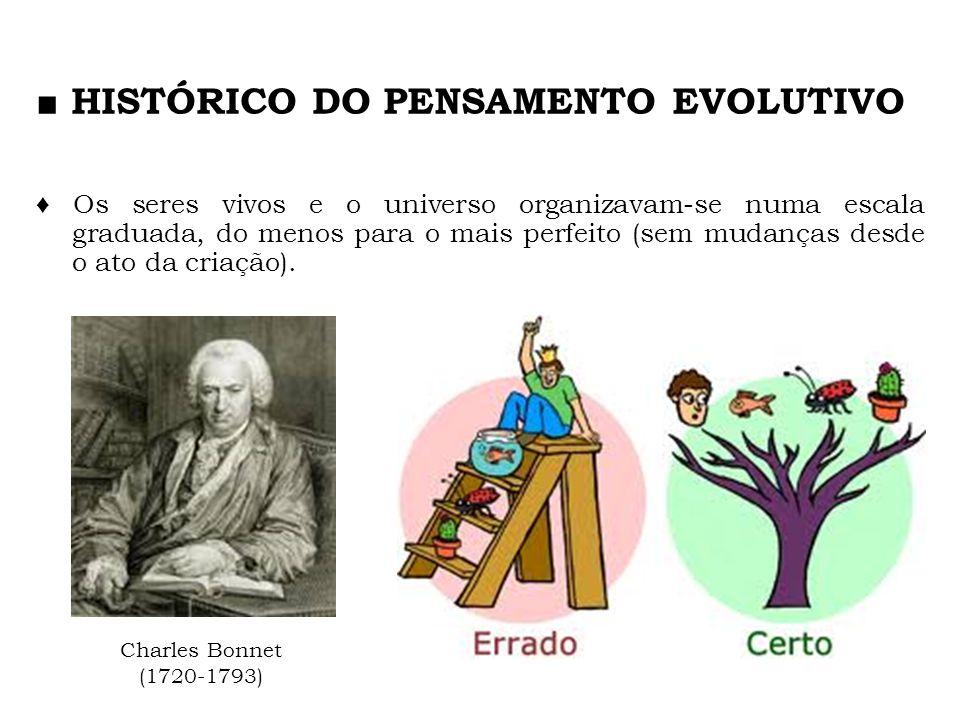 HISTÓRICO DO PENSAMENTO EVOLUTIVO Os seres vivos e o universo organizavam-se numa escala graduada, do menos para o mais perfeito (sem mudanças desde o