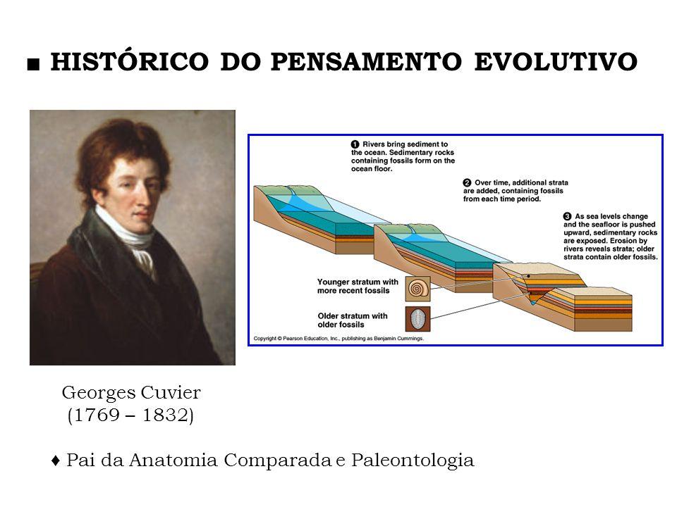 Os eventos do passado influenciam os padrões de distribuição do presente.