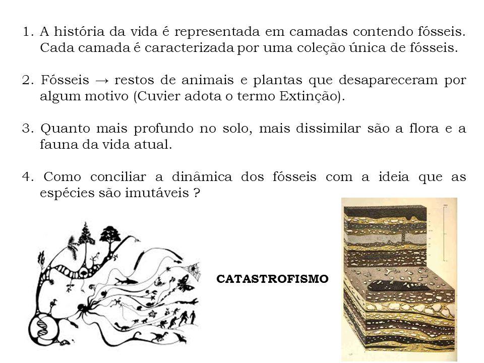 1.A história da vida é representada em camadas contendo fósseis. Cada camada é caracterizada por uma coleção única de fósseis. 2. Fósseis restos de an
