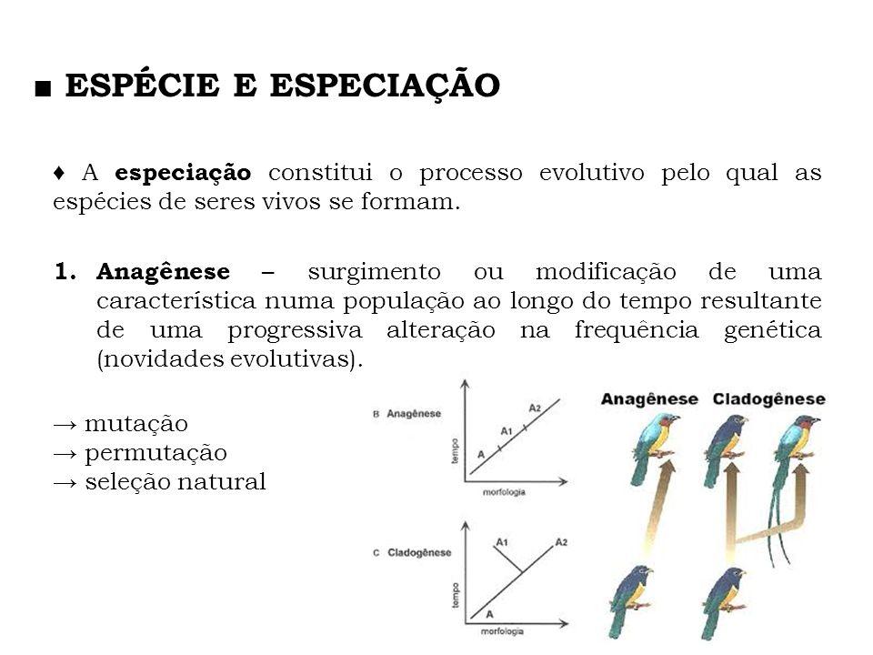 A especiação constitui o processo evolutivo pelo qual as espécies de seres vivos se formam. 1. Anagênese – surgimento ou modificação de uma caracterís