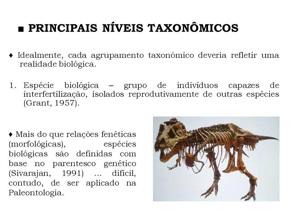 PRINCIPAIS NÍVEIS TAXONÔMICOS Idealmente, cada agrupamento taxonômico deveria refletir uma realidade biológica. 1.Espécie biológica – grupo de indivíd