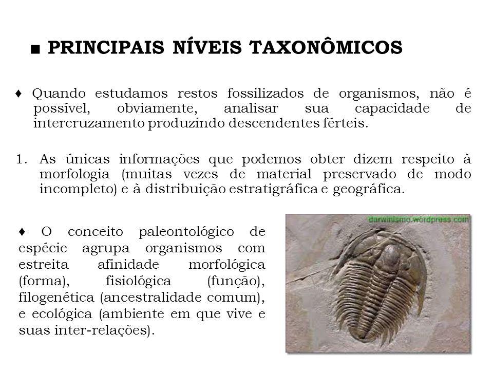 PRINCIPAIS NÍVEIS TAXONÔMICOS Quando estudamos restos fossilizados de organismos, não é possível, obviamente, analisar sua capacidade de intercruzamen