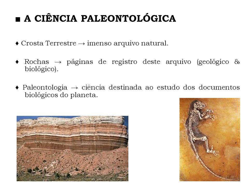 A CIÊNCIA PALEONTOLÓGICA Crosta Terrestre imenso arquivo natural. Rochas páginas de registro deste arquivo (geológico & biológico). Paleontologia ciên