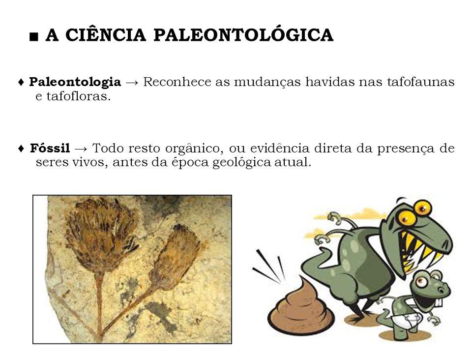 A CIÊNCIA PALEONTOLÓGICA Paleontologia Reconhece as mudanças havidas nas tafofaunas e tafofloras. Fóssil Todo resto orgânico, ou evidência direta da p
