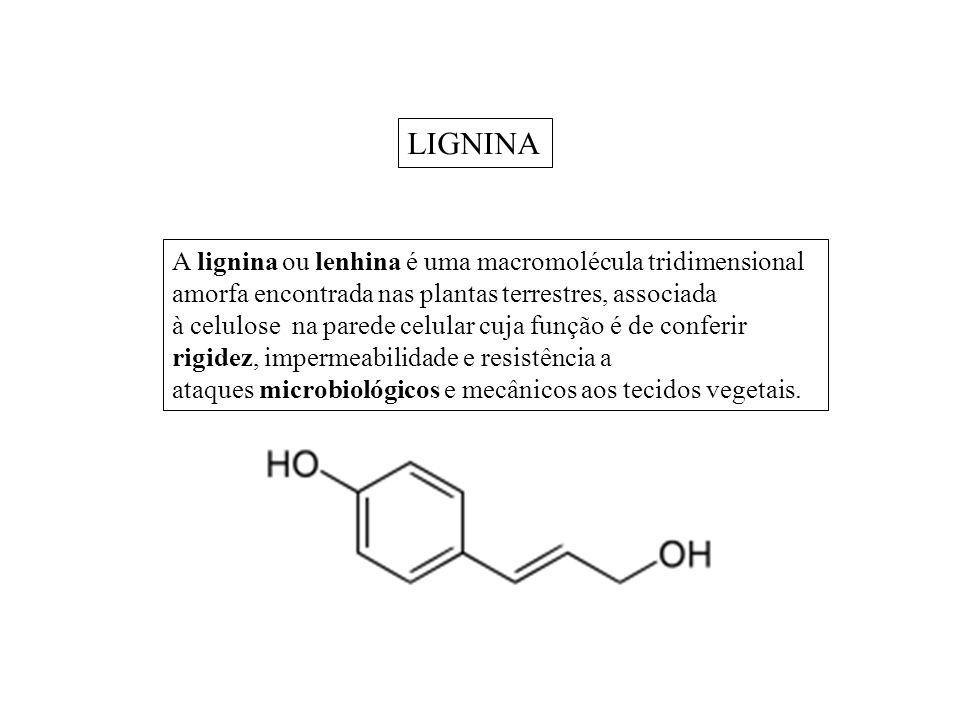 A lignina ou lenhina é uma macromolécula tridimensional amorfa encontrada nas plantas terrestres, associada à celulose na parede celular cuja função é de conferir rigidez, impermeabilidade e resistência a ataques microbiológicos e mecânicos aos tecidos vegetais.