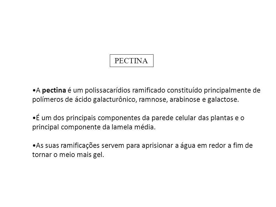 A pectina é um polissacarídios ramificado constituído principalmente de polímeros de ácido galacturônico, ramnose, arabinose e galactose.