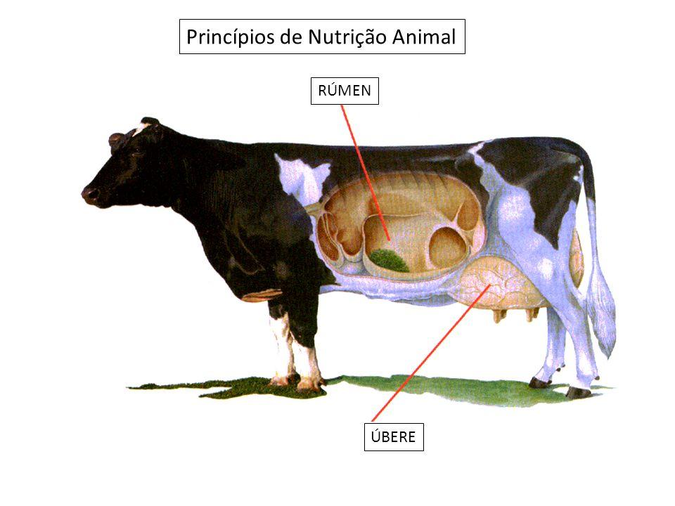 Princípios de Nutrição Animal ÚBERE RÚMEN