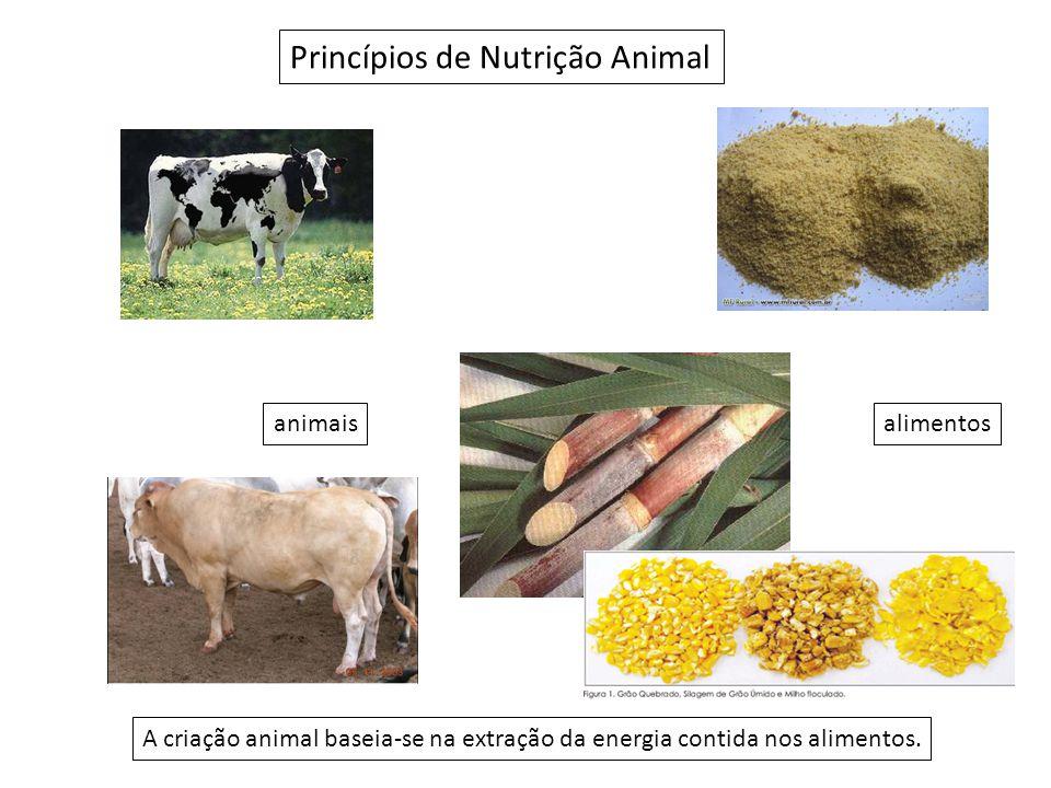Princípios de Nutrição Animal A criação animal baseia-se na extração da energia contida nos alimentos.