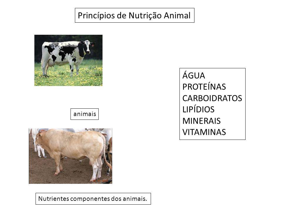 Princípios de Nutrição Animal Nutrientes componentes dos animais.