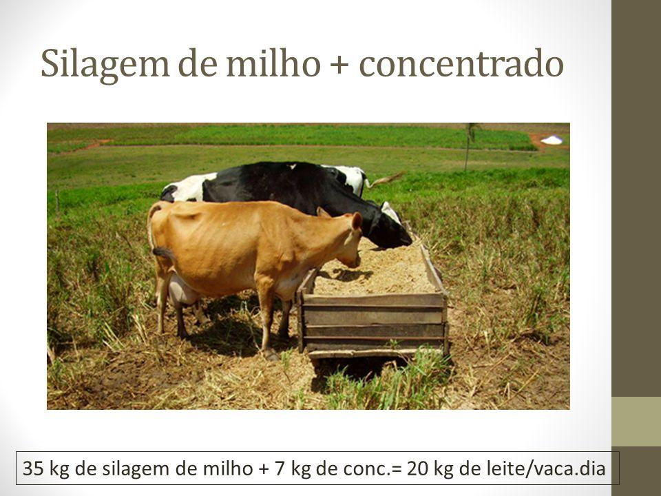 Silagem de milho + concentrado 35 kg de silagem de milho + 7 kg de conc.= 20 kg de leite/vaca.dia