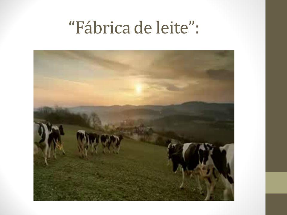 Fábrica de leite: