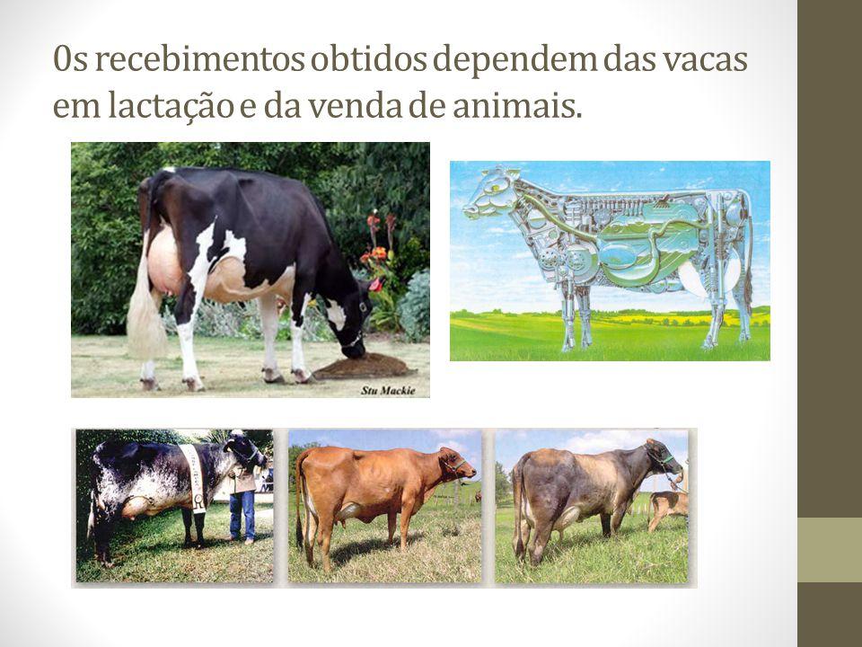 0s recebimentos obtidos dependem das vacas em lactação e da venda de animais.