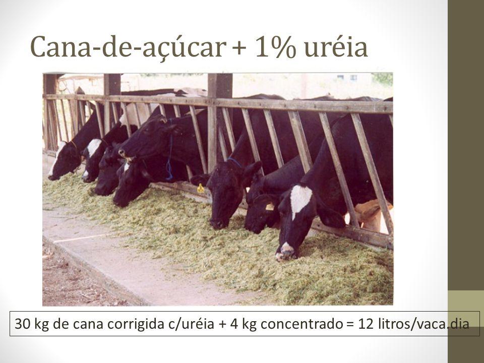 O grande desafio é emprenhar a vaca até 90 dias após parto.