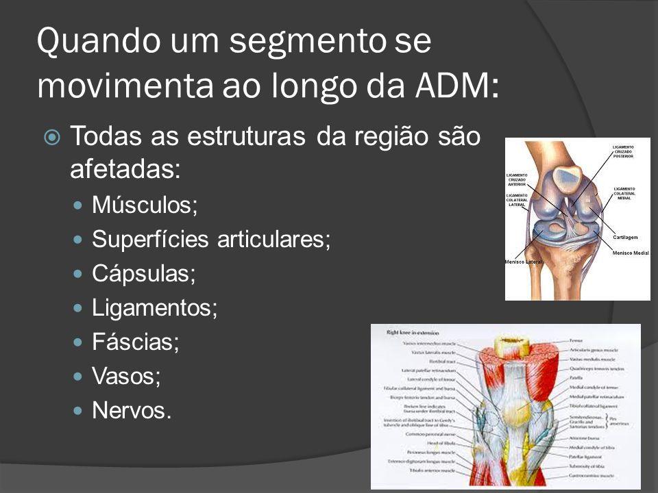 Quando um segmento se movimenta ao longo da ADM: Todas as estruturas da região são afetadas: Músculos; Superfícies articulares; Cápsulas; Ligamentos;