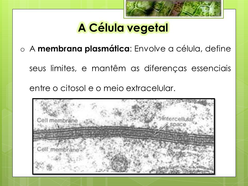 o A membrana plasmática : Envolve a célula, define seus limites, e mantêm as diferenças essenciais entre o citosol e o meio extracelular.
