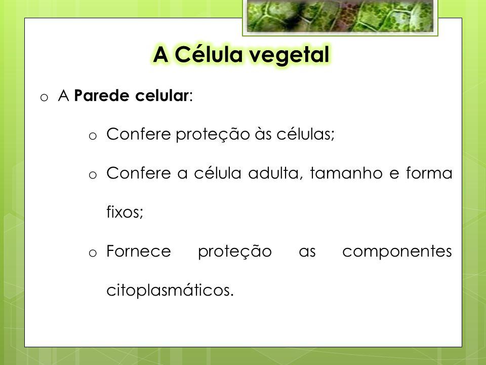 o A Parede celular : o Confere proteção às células; o Confere a célula adulta, tamanho e forma fixos; o Fornece proteção as componentes citoplasmáticos.