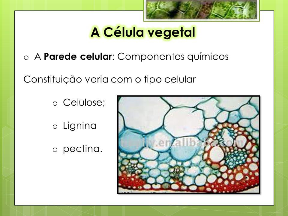 o A Parede celular : Componentes químicos Constituição varia com o tipo celular o Celulose; o Lignina o pectina.