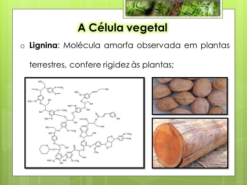 o Lignina : Molécula amorfa observada em plantas terrestres, confere rigidez às plantas;