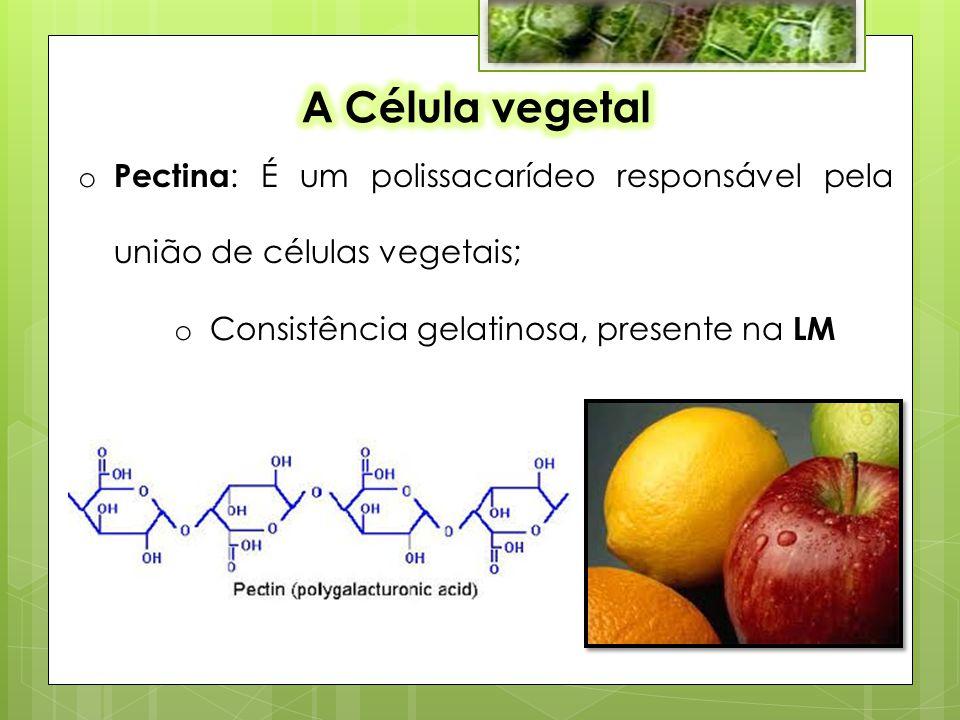 o Pectina : É um polissacarídeo responsável pela união de células vegetais; o Consistência gelatinosa, presente na LM