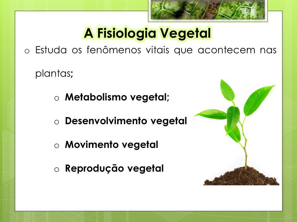 o Estuda os fenômenos vitais que acontecem nas plantas ; o Metabolismo vegetal; o Desenvolvimento vegetal o Movimento vegetal o Reprodução vegetal