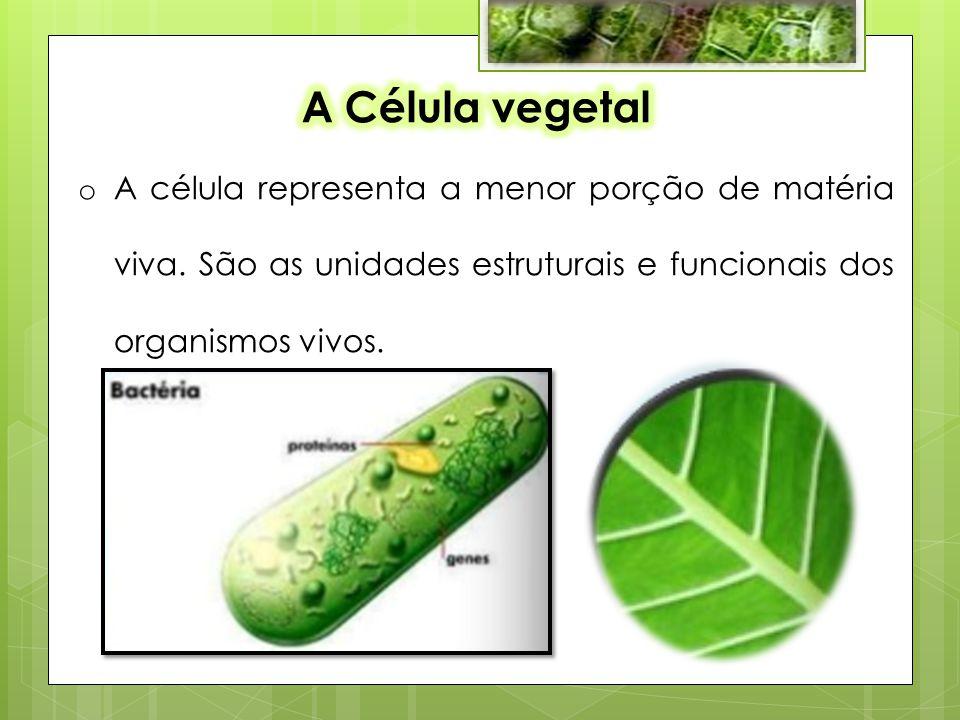 o A célula representa a menor porção de matéria viva.