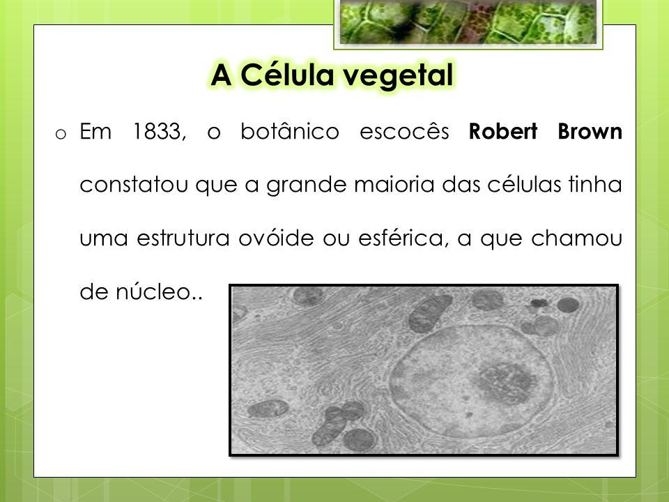 o Em 1833, o botânico escocês Robert Brown constatou que a grande maioria das células tinha uma estrutura ovóide ou esférica, a que chamou de núcleo..