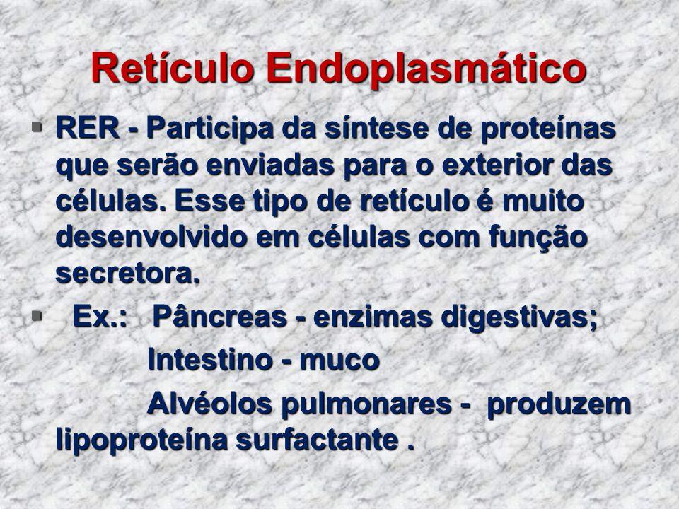 Retículo Endoplasmático RER - Participa da síntese de proteínas que serão enviadas para o exterior das células. Esse tipo de retículo é muito desenvol