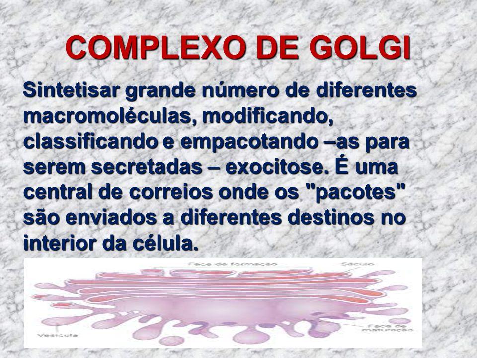 COMPLEXO DE GOLGI Sintetisar grande número de diferentes macromoléculas, modificando, classificando e empacotando –as para serem secretadas – exocitos