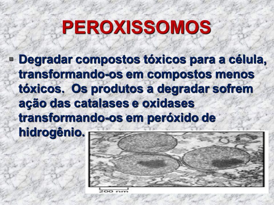 PEROXISSOMOS Degradar compostos tóxicos para a célula, transformando-os em compostos menos tóxicos. Os produtos a degradar sofrem ação das catalases e