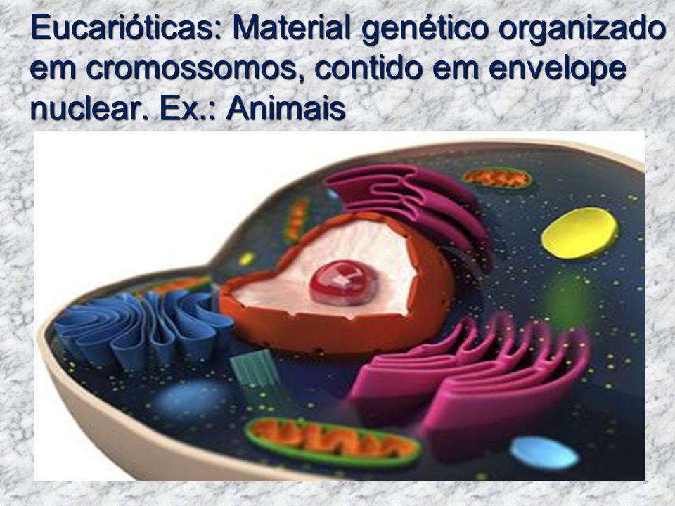 Eucarióticas: Material genético organizado em cromossomos, contido em envelope nuclear. Ex.: Animais