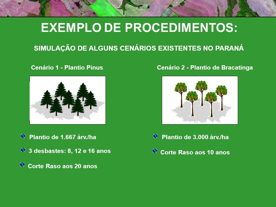 Cenário 1 - Plantio PinusCenário 2 - Plantio de Bracatinga Plantio de 1.667 árv./ha 3 desbastes: 8, 12 e 16 anos Corte Raso aos 20 anos Plantio de 3.000 árv./ha Corte Raso aos 10 anos EXEMPLO DE PROCEDIMENTOS: SIMULAÇÃO DE ALGUNS CENÁRIOS EXISTENTES NO PARANÁ