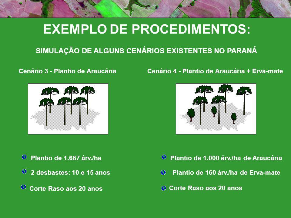 Cenário 3 - Plantio de AraucáriaCenário 4 - Plantio de Araucária + Erva-mate Plantio de 1.667 árv./ha 2 desbastes: 10 e 15 anos Corte Raso aos 20 anos Plantio de 1.000 árv./ha de Araucária Corte Raso aos 20 anos Plantio de 160 árv./ha de Erva-mate EXEMPLO DE PROCEDIMENTOS: SIMULAÇÃO DE ALGUNS CENÁRIOS EXISTENTES NO PARANÁ