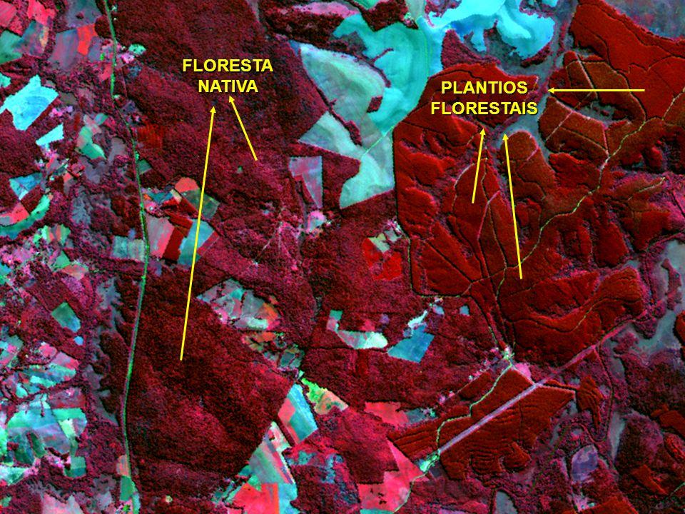PLANTIOSFLORESTAIS FLORESTANATIVA PLANTIOS FLORESTAIS IDADES DIFERENTES