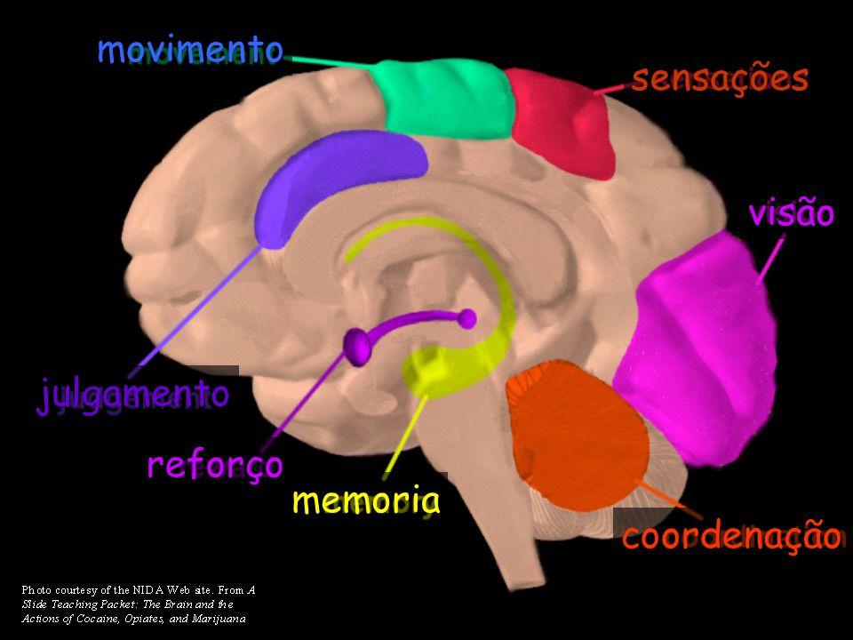 memoria reforço julgamento movimento sensações visão coordenação