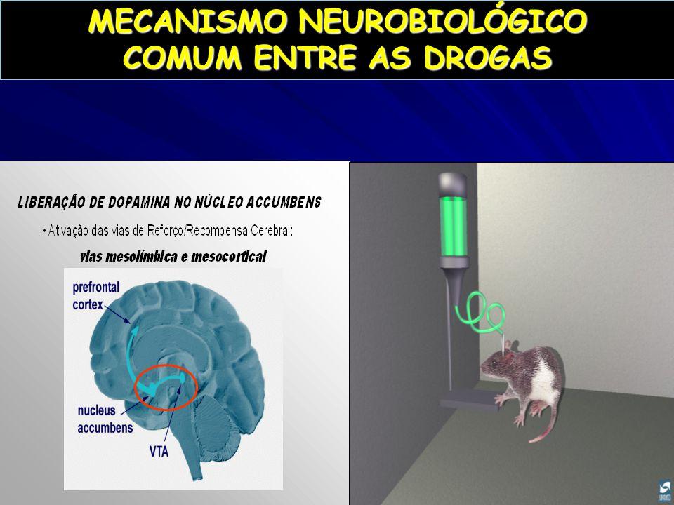 MECANISMO NEUROBIOLÓGICO COMUM ENTRE AS DROGAS