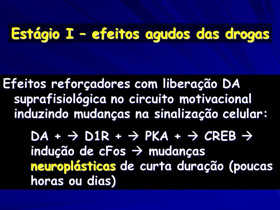 Efeitos reforçadores com liberação DA suprafisiológica no circuito motivacional induzindo mudanças na sinalização celular: DA + D1R + PKA + CREB induç