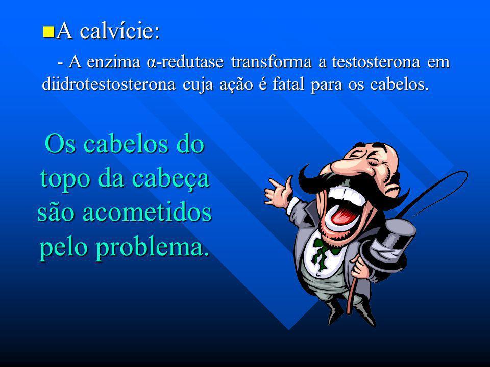 A calvície: A calvície: - A enzima α-redutase transforma a testosterona em diidrotestosterona cuja ação é fatal para os cabelos. - A enzima α-redutase