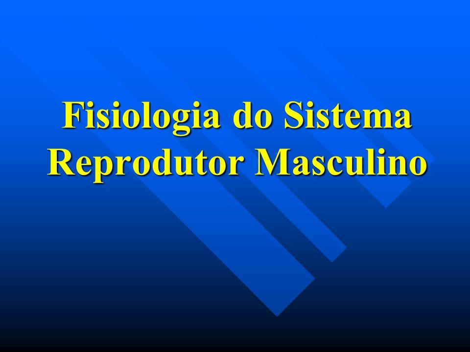 Via biossintética para a síntese de testosterona