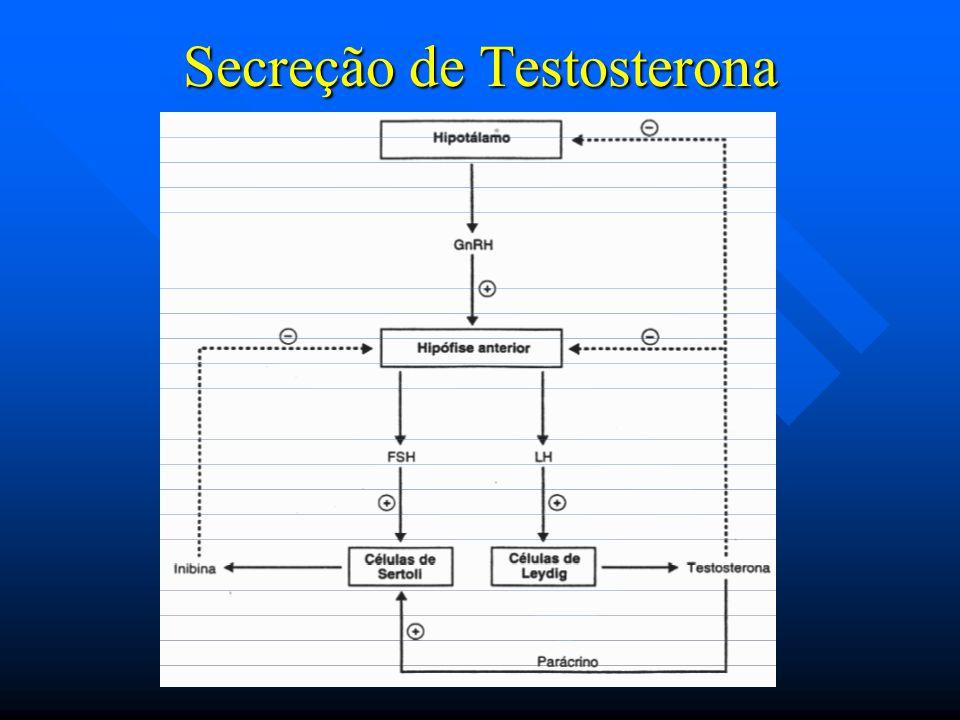 Secreção de Testosterona