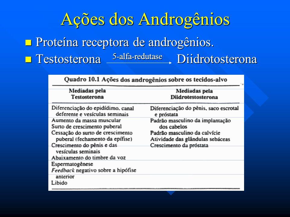 Ações dos Androgênios Proteína receptora de androgênios. Proteína receptora de androgênios. Testosterona 5-alfa-redutase Diidrotosterona Testosterona