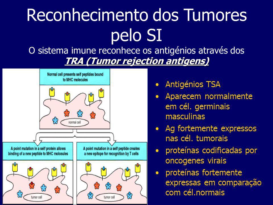 Resposta do SI a Tumores Anticorpos monoclonais contra subsets T, monocitos/macrófagos e células NK podem determinar subpopulações no local do tumor e a sua distribuição micro-anatómica; O nosso SI vigia constantemente o aparecimento de células neoplásicas e destroi-as e para tal conta com as células NK e reconhecimento do MHC: por um lado alguns tumores não expressam MHC Classe I enquanto que outros expressam antigénios Classe II - o SI no 1º caso não pode recorrer ás células citotóxicas TCD8+, mas pelo menos usar as T helper CD4+.