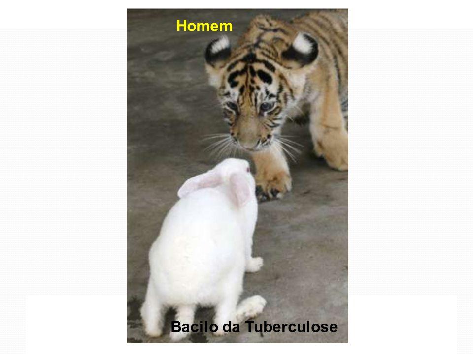 Tratamento Preventivo da Tuberculose Andrea Rossoni Infectologia Pediátrica HC – UFPR Bacilo da Tuberculose Homem