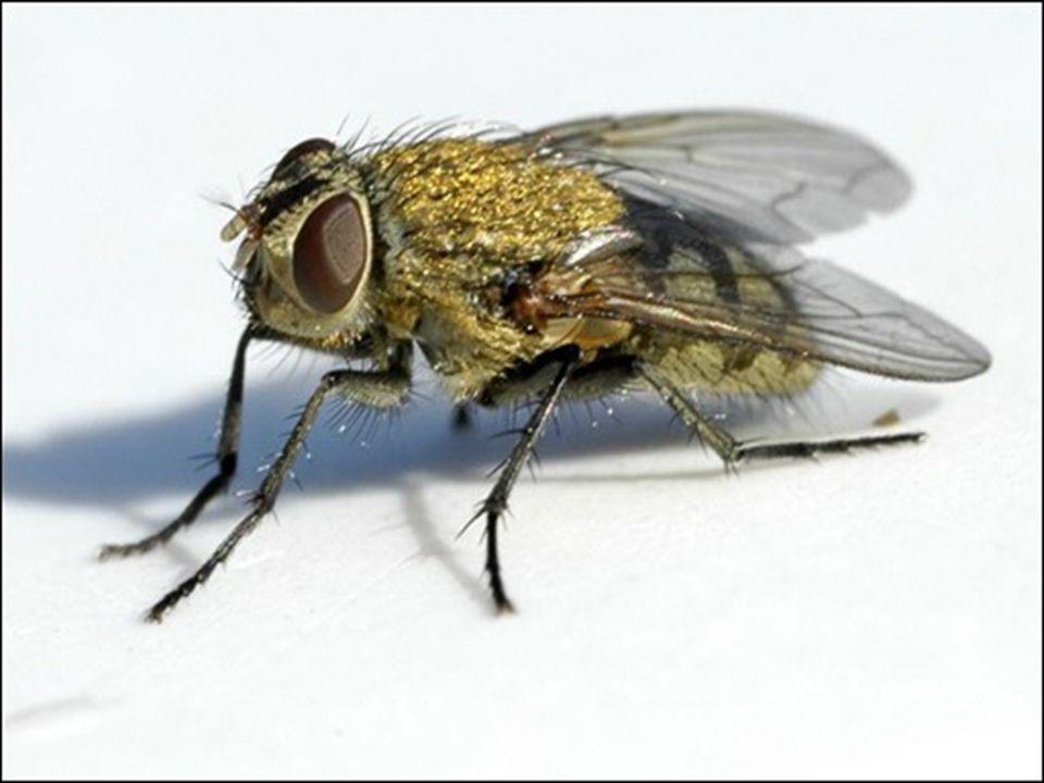 Mudar fundo branco azul letra preta Foto mosca Analogia o mortalidade