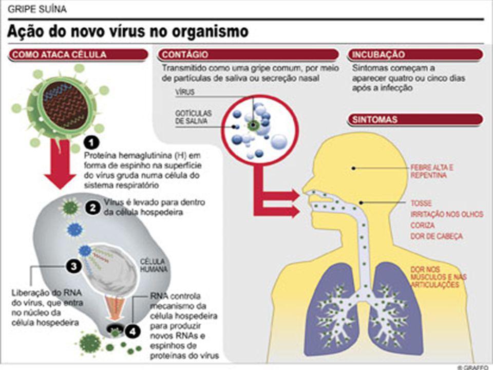 PANDEMIA DE 1918 GRIPE ESPANHOLA USA e Europa Gripe Humana: Influenza / Gripe EspanholaGripe Humana: Influenza / Gripe Espanhola Guerra: Aparecimento em duas etapasGuerra: Aparecimento em duas etapas Vírus (H1N1) relativamente brando / Primavera Vírus (H1N1) relativamente brando / Primavera Voltou no Outono: Tornou-se mortal Voltou no Outono: Tornou-se mortal Quando ele retorna, existe a possibilidade de ser mais virulento.
