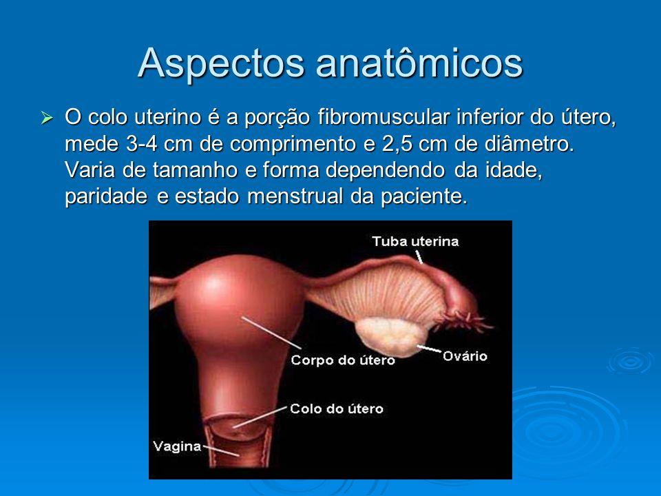O colo uterino é a porção fibromuscular inferior do útero, mede 3-4 cm de comprimento e 2,5 cm de diâmetro.