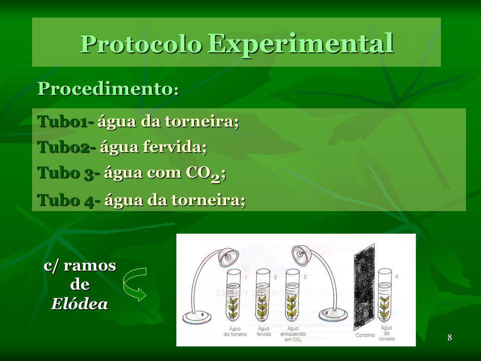 8 Protocolo Experimental Procedimento : Tubo1- água da torneira; Tubo2- água fervida; Tubo 3- água com CO 2 ; Tubo 4- água da torneira; c/ ramos de Elódea